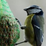 Foto-Galerie - Futter für Vogel & Nager